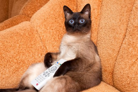 The cat with the remote control in front of the TV, watching an interesting show.