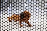 Lion model animals through steel grating.