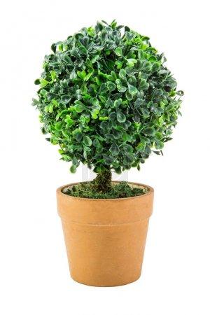 Photo pour Arbre en plastique de buisson de plante de pot isolé sur fond blanc avec le chemin de coupe - image libre de droit