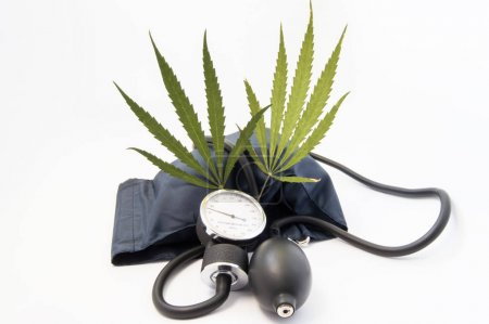 Weed (marijuana, cannabis), cardiovascular system and blood pressure. Two cannabis leaf standing upright among sphygmomanometer inflated cuff close to the measuring scale tonometer and air bulb
