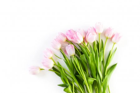 Pink tulips view