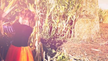 Toddler girl  in corn maze
