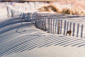 weathered wooden fencing protecting native dunes grass along beach