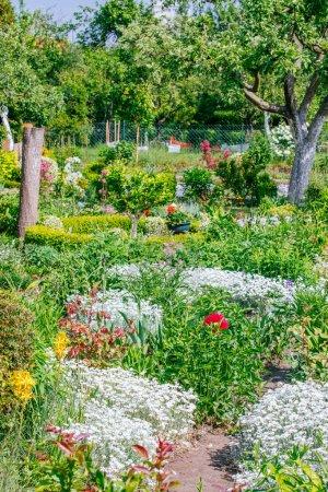 Photo pour Beau jardin à la maison Allotment au printemps - image libre de droit
