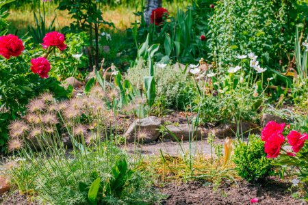 Photo for Beautiful Home garden Allotment in spring time - Royalty Free Image