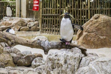 Мадагаскар пингвин Кейптаун