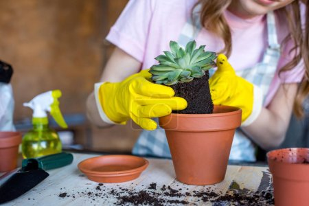 woman putting plant in flowerpot