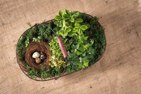 Korb mit Pflanzen und Eiern