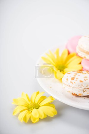 Macarons and yellow flowers