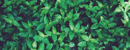 Photo pour Fond bio frais et sain flou naturel vue de dessus, flore floue abstraite et éclat d'été lumineux fond de soleil dans le parc, copyspace pour le texte ou la publicité, texture de feuille verte bokeh, concept d'écologie - image libre de droit