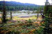 Swampy glade in the Siberian taiga in the foothills of the Khamar-Daban