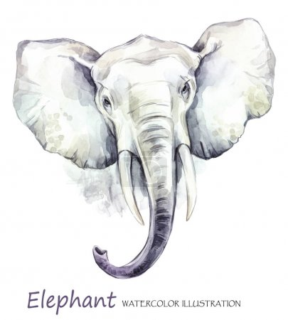 Watercolor elephant on the white background.