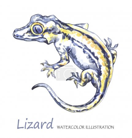 Watercolor Lizard on the white background.