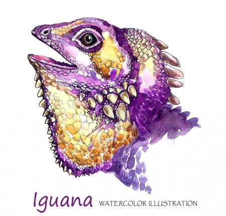 Watercolor Iguana on the white background.