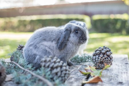 Two cute bunnies pet walking on a wooden table with pines outdoor