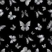 butterfly s black 01