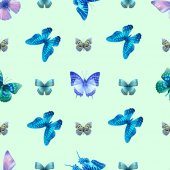 nith butterfly 01