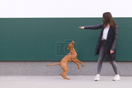 The owner plays with the puppies against the background of the wall. Dog games against the background of the walls. Walking with a dog. Pets concept