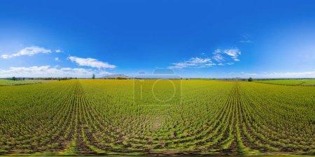 Photo pour 360 panorama par 180 degrés vue panoramique sans couture d'angle de vue aérienne du champ de tournesol pleine floraison dans voyage vacances voyage au parc naturel de jardin en été à Lopburi, Thaïlande. Nature . - image libre de droit