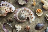 Travel to island Koh Lanta, Thailand. Colorful seashells on the sand beach.