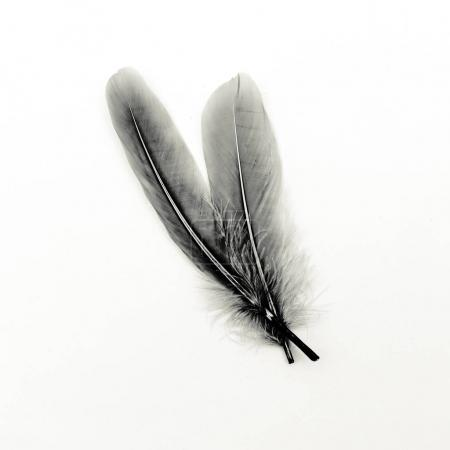 Feathers black and white art gallery