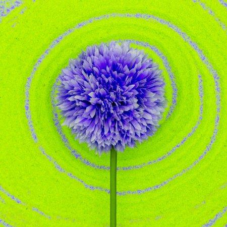 Purple flower. Minimal style