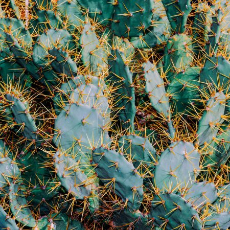 Photo for Cactus Background. Cacti lover Concept - Royalty Free Image
