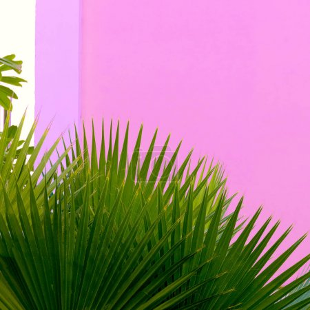 Plants on pink. Palm outdoors