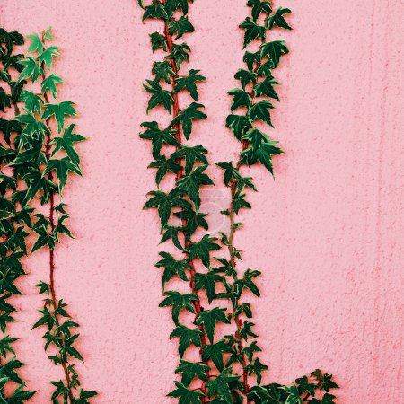 Plants on pink.  Fashion plant lover. Minimal
