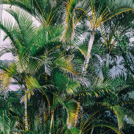 Palm trees background  tropical fashion minimal
