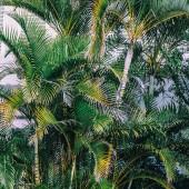 """Постер, картина, фотообои """"Пальмовые деревья фон тропических моды минимальный"""""""