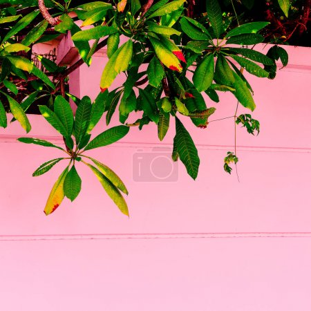 Photo for Plants on pink.  Fashion tropical green. Minimal pink wall - Royalty Free Image