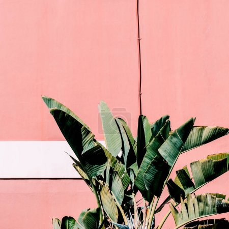 Photo for Fashion content. Plant on pink.  Tropical green mood - Royalty Free Image