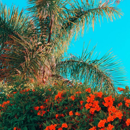 Fashion tropical mood.  Palm and flowers. Beach lover