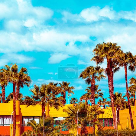 Canary Island. Travel. Palm tropical vibes