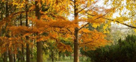 Autumn yellow trees