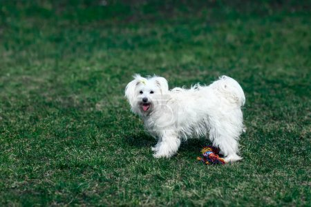 Cute dog playing outdoors with toy