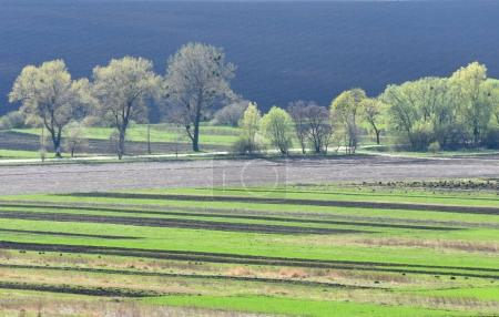 Photo for Farmland, plowed field, spring, landscape, - Royalty Free Image