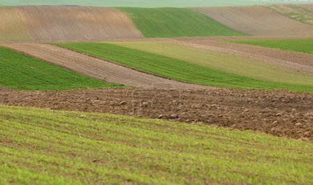 Photo for Farmland, plowed field, spring, landscape, agricultural, fields of wheat - Royalty Free Image