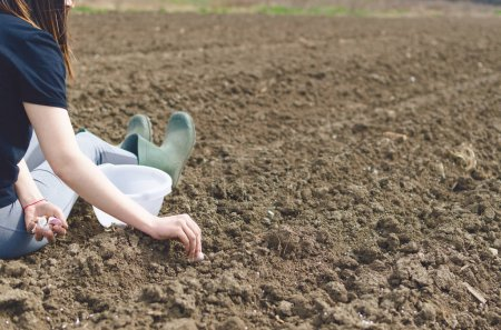 Photo for Hand of woman farmer seeding onions in organic vegetable garden, Close up of hand planting seed in soil. - Royalty Free Image