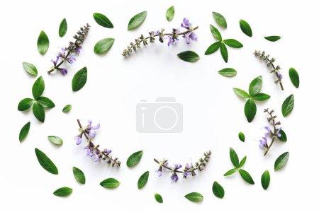 Photo pour Fleurs de prairie pourpres et cadre de feuilles vertes sur fond blanc . - image libre de droit