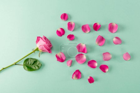 Rose flower and petals