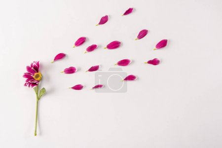 Photo for Half of beautiful pink flower and petals on light background, spring concept - Royalty Free Image
