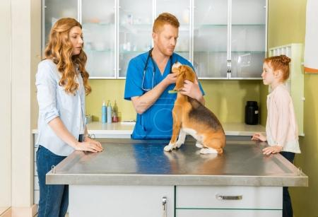 Photo for Veterinary examining Beagle dog at clinic, woman and daughter pet owners standing near - Royalty Free Image