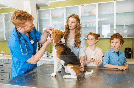 Veterinary examing dog at clinic