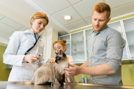 veterinary ausculting cat with stethoscope