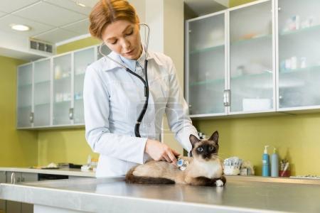 Photo pour Femme vétérinaire auscultant chat avec stéthoscope à la clinique - image libre de droit