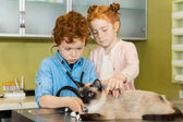 boy and girl ausculting cat at clinic