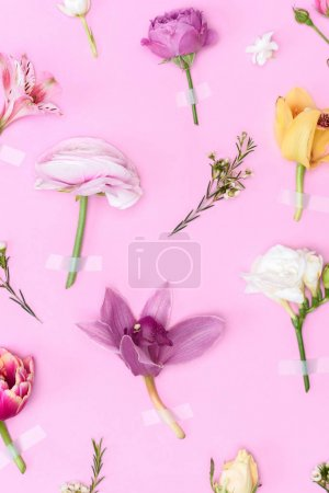 Photo for Top view of beautiful blooming flowers and buds isolated on pink - Royalty Free Image
