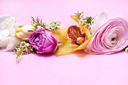 Photo pour Vue rapprochée des belles fleurs épanouies divers isolement sur rose - image libre de droit
